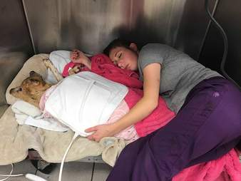 Vet sleeping in kennel with injured dog