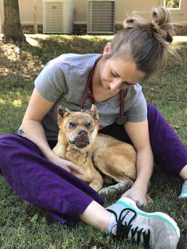 Vet cuddling with injured dog in yard