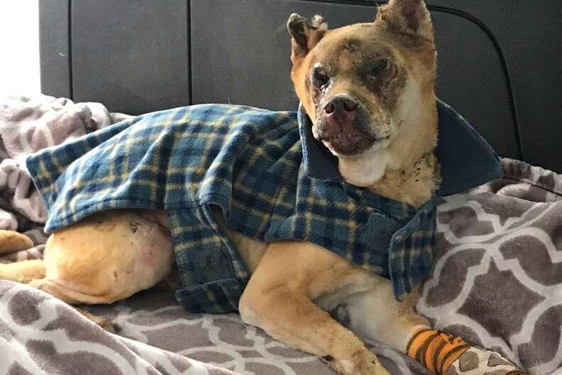 Injured dog lying on blanket
