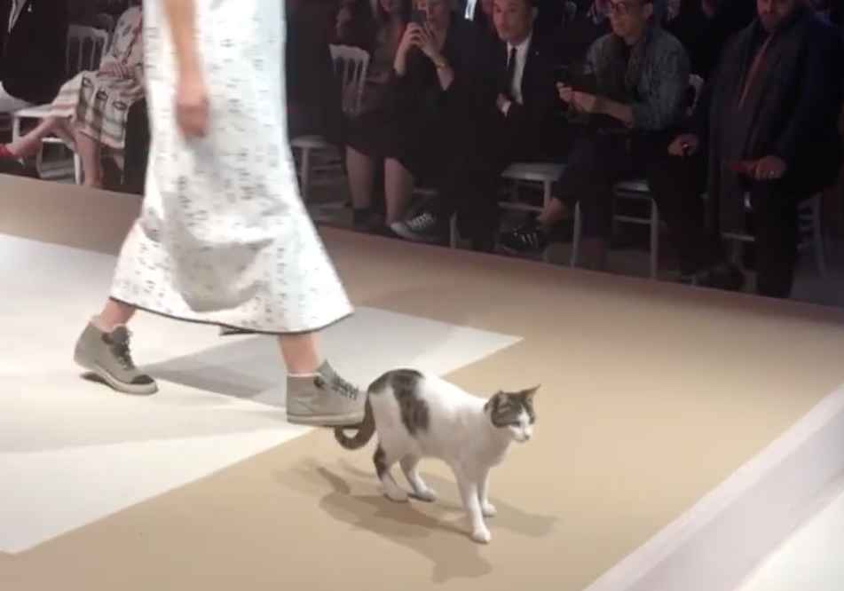 3b514fd8a2 Stray Cat Walks Fashion Runway in Turkey and Becomes Fashion Sensation -  Thrillist