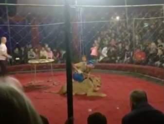 lion attack circus