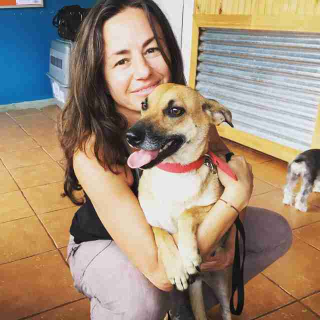 Abandoned pregnant dog in Costa Rica with rescuer