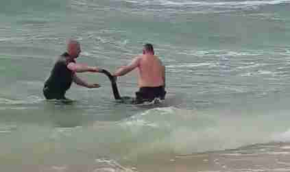 Kangaroo rescued from ocean in Australia