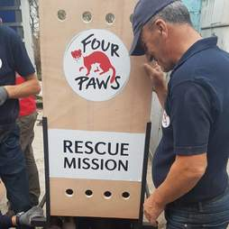 Rescuers moving animals from zoo in Albania