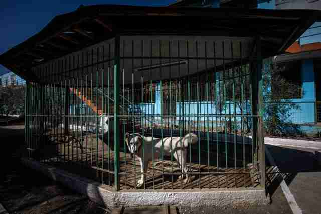 Dog displayed in cage at Albania Zoo