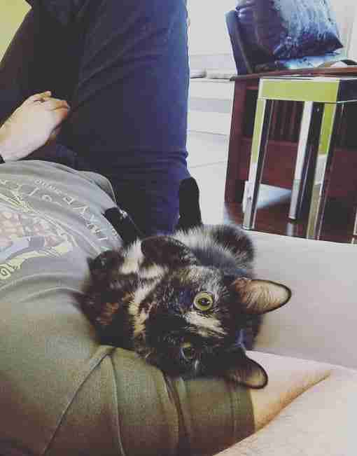 Onyx the cat snuggles her adopters