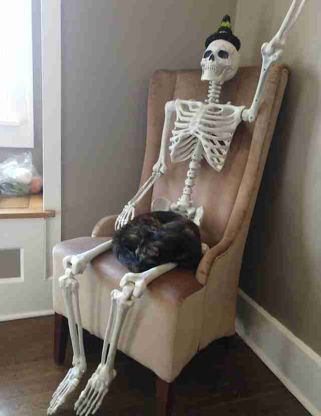 Cat snuggles up to skeleton