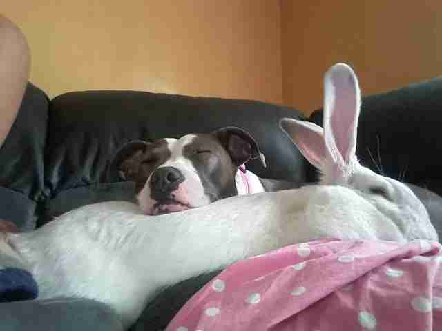 Dog Saved From Fighting Finds Comfort In Bunny As Big As She Is