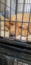 Puppy in cage at vet office