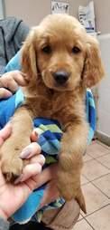 Puppy being held in towel