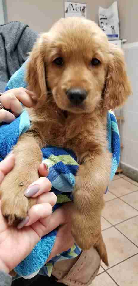 Puppy being held in towel