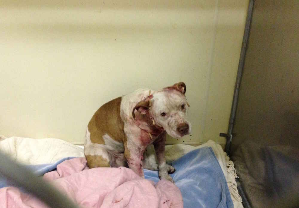 Rescued Dog Was Supposed To Be Put Down — But Then Vet Tech Hugged Him