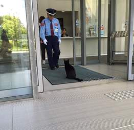 Black cat tries to enter Japanese art museum
