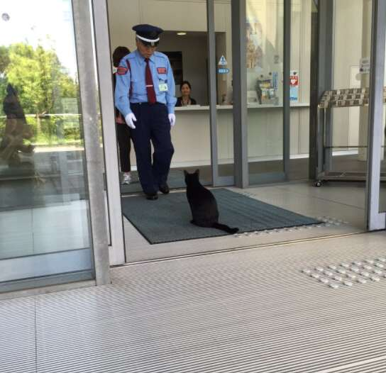 Black cat tries to enter Japanese art museum