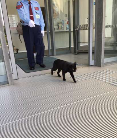 Cat is turned away by museum guards at Hiroshima Onomichi City Museum