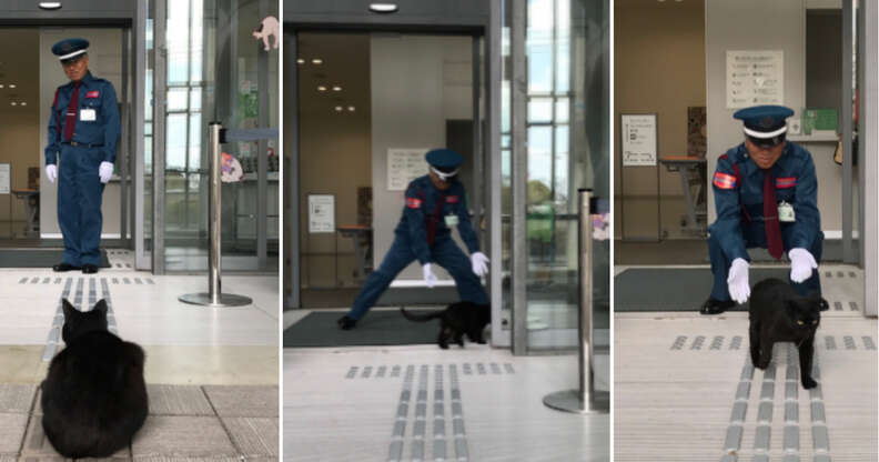 Cat tries to enter art museum in March 2017