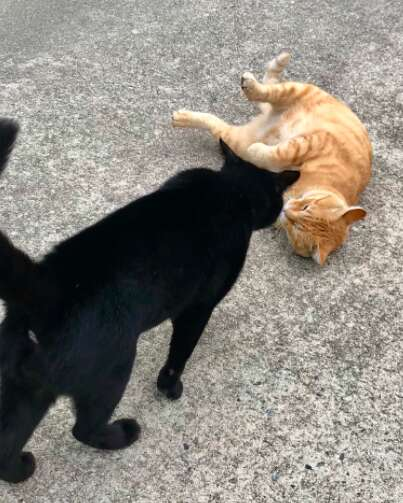 Two cats try to enter museum in Japan