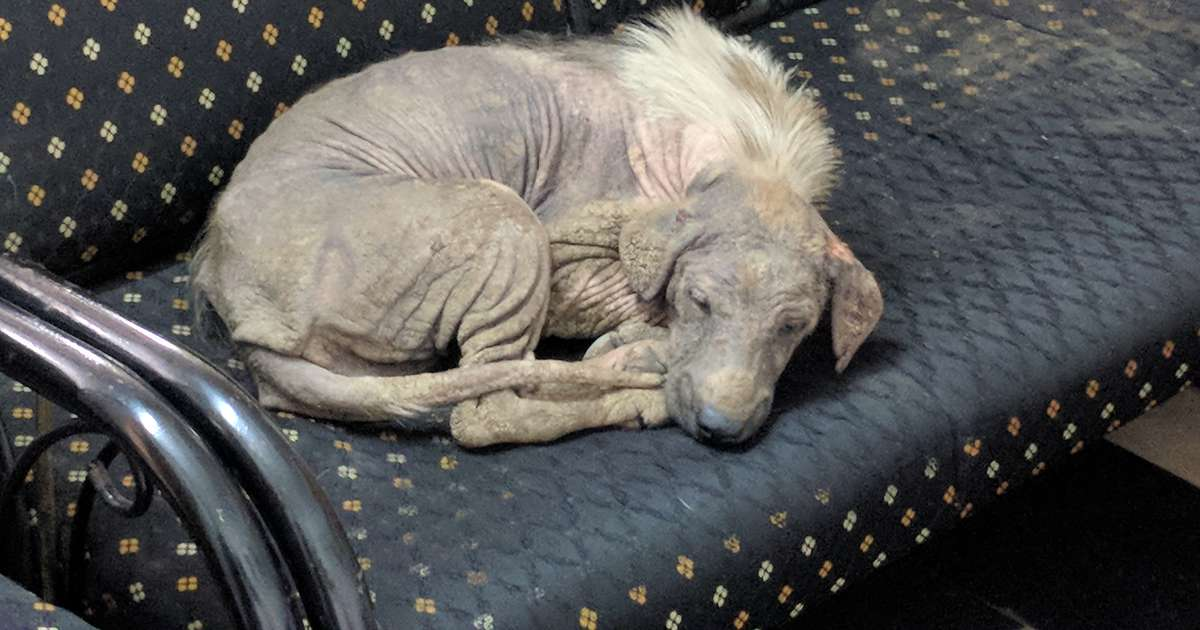 Sick Stray Dog Walks Right Through Doors Of Shelter And Happily Falls Asleep