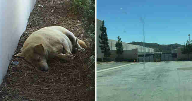 Abandoned dog found in L.A. parking lot