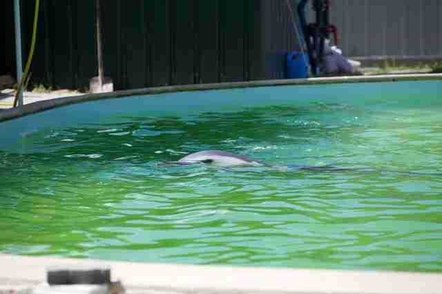 Dolphin kept in small, concrete pool