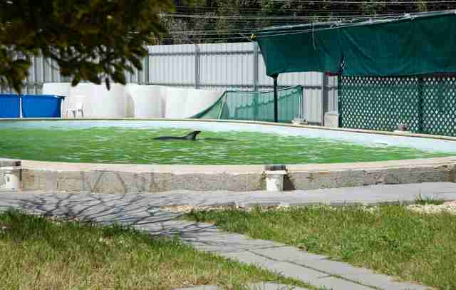 Dolphin inside tiny concrete pool