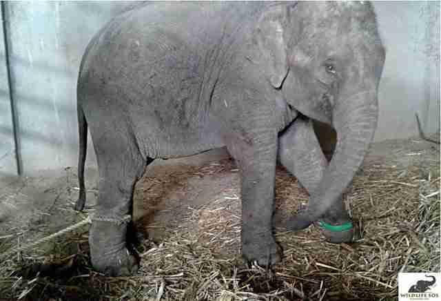 elephant rides india