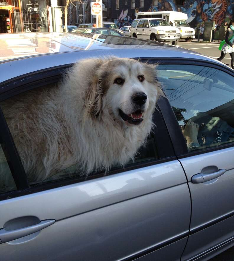 A dog sticking his head out a car window