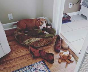 Luna the dog collects her owner's shoes for comfort