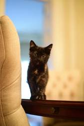 North Carolina governor adopts stray kitten