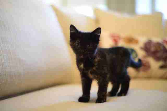 North Carolina governor adopts stray kitten