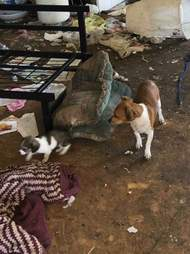 Dogs inside filthy house