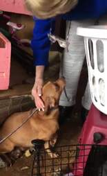 Rescuer saving dog from filthy house