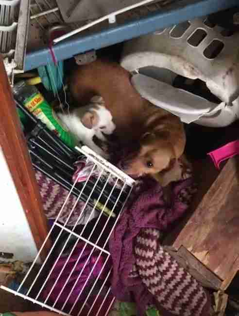Dogs hiding in filthy house