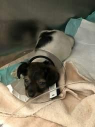 Sick puppy at vet office