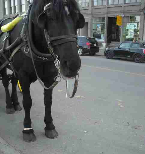 horse carriage cruelty