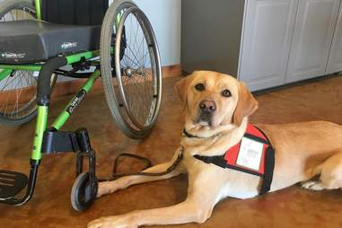 Service Dogs, Inc.