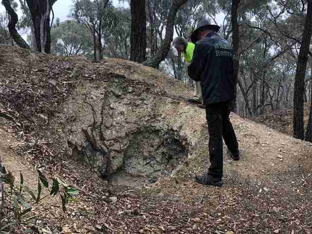 Men coming to rescue kangaroo stuck in old mineshaft in Victoria, Australia