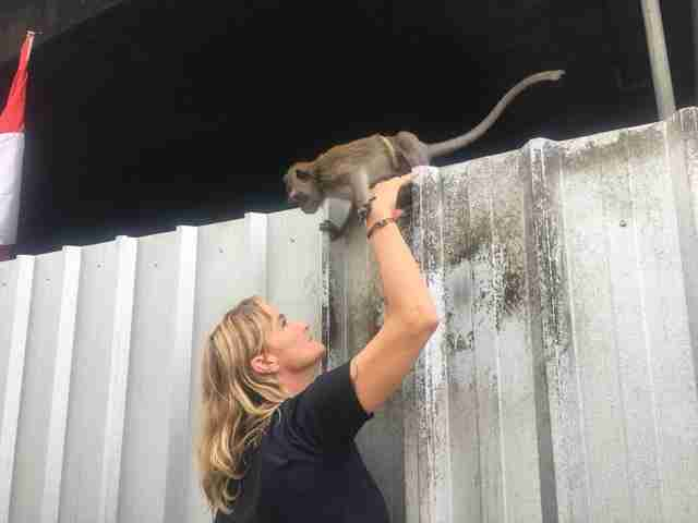 Woman reaching up to help chained monkey
