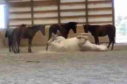 Mother horse who lost her baby finds joy again