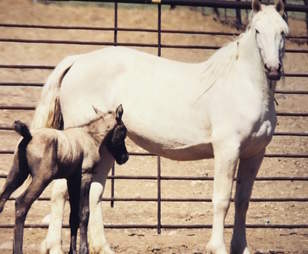 Mother horse with foal at BLM facility