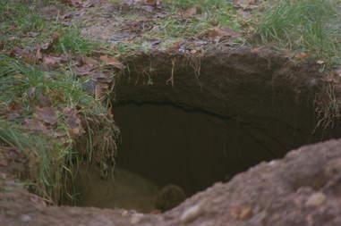 Rescued bear loves building dens for hibernation