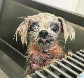 Martha takes a bath to help her skin heal