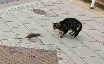 Cat and rat meet on Luxembourg street