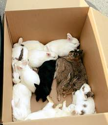 rabbit rescue california