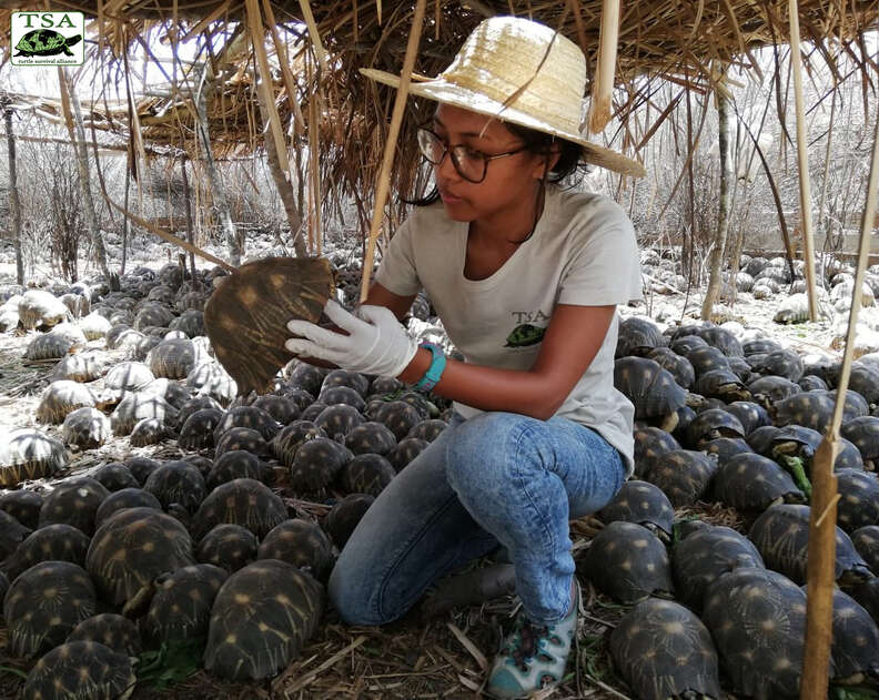 Rescuer holding radiated tortoise