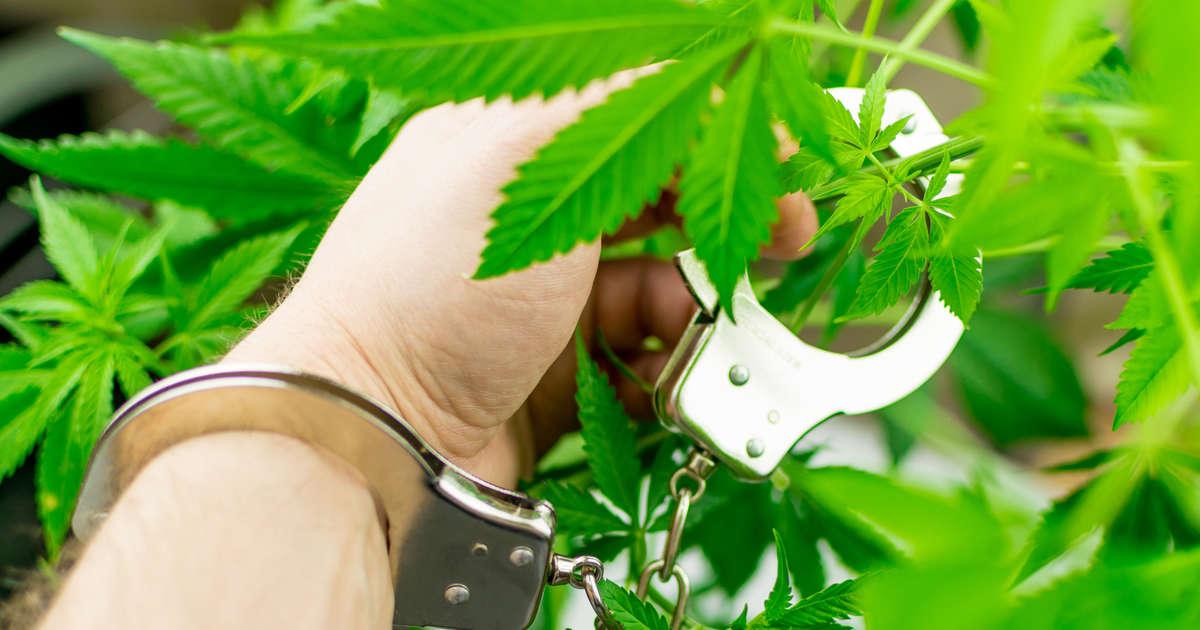 Cop Steals Edible, Gets So High He Calls for Help, Judge Calls Him a 'Complete Idiot'