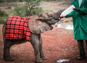 elephant rescue kenya