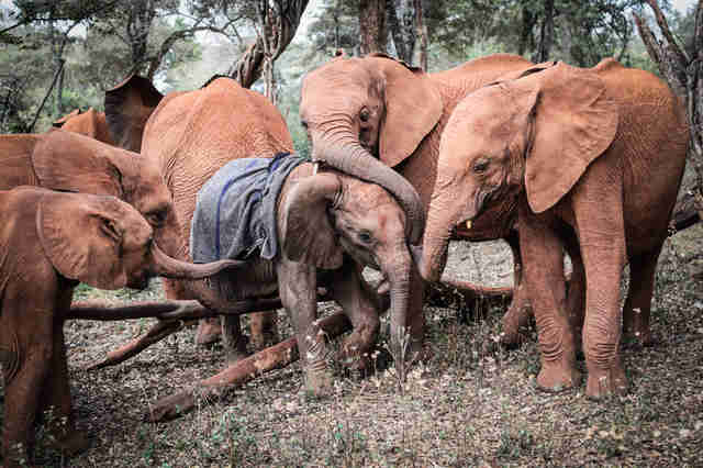 elephant rescue kenya