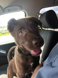 man gives away puppy in parking lot