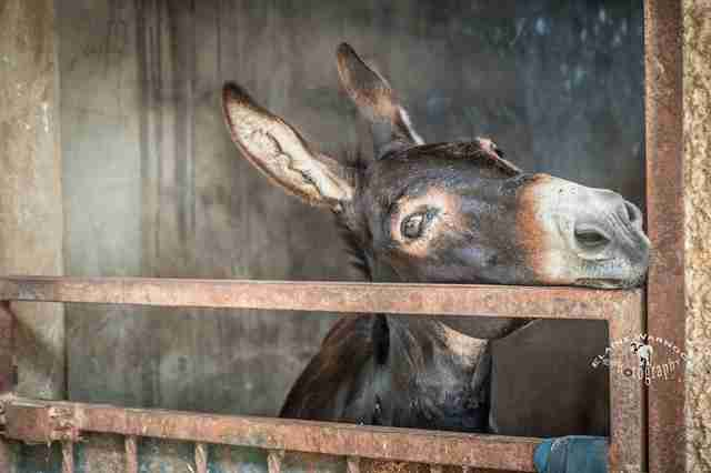 Rescued donkey in Spain